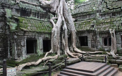 Ta Prohm Temple - Cambodia tour
