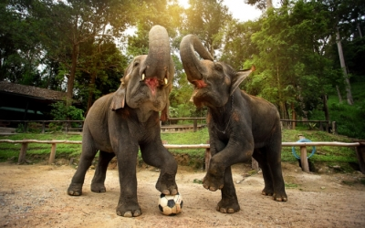 Elephant Village Camp Experience - Laos tour