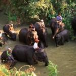 elephants need a bath